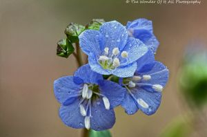 blue-flower-2.jpg